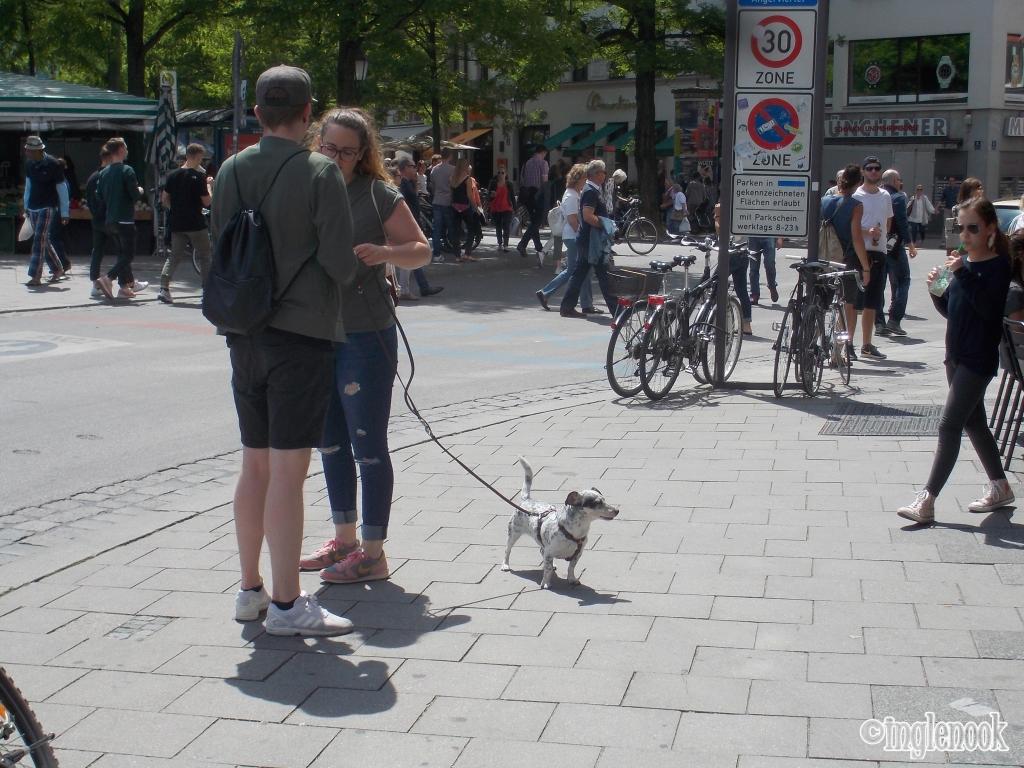 ハーネスを付けた犬 ドイツ ミュンヘン