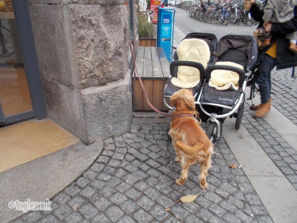 まちぼう犬 留守番犬 デンマーク コペンハーゲンパン屋の店先