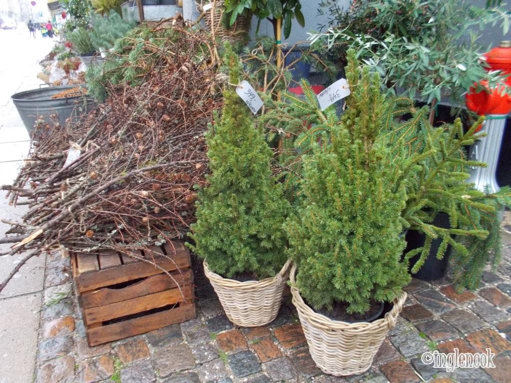 花屋の店頭で売られるモミの木 デンマーク コペンハーゲン