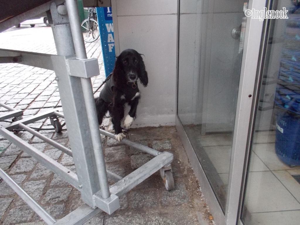 まちぼう犬 留守番犬 スーパーマーケット イヤマ Irma