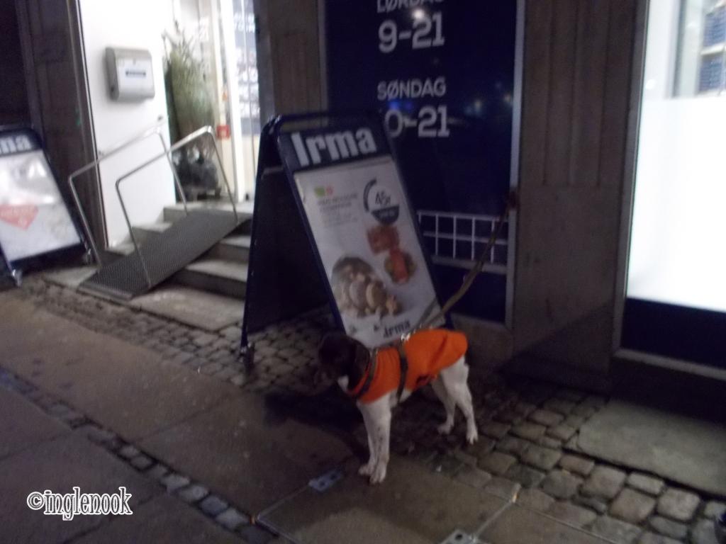 スーパー イヤマ irma の前で待つ犬 留守番犬 まちぼう犬
