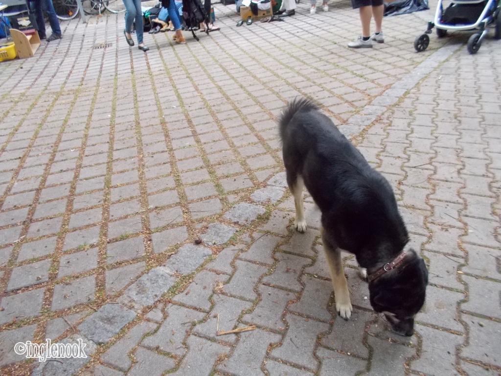 地面のにおいをかぐ犬 ミュンヘン ホフフローマルクト