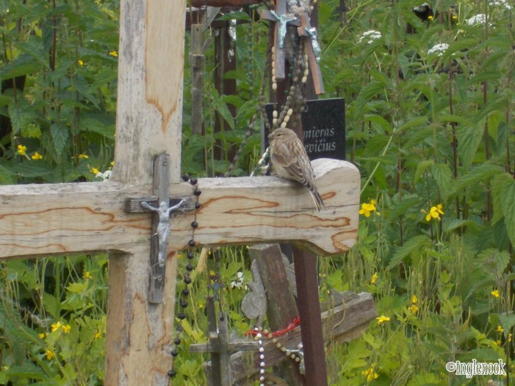 十字架の丘 十字架にとまる小鳥