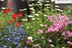 ターシャの育てた花