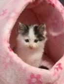 子猫の「ここ」
