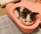 お風呂ブーツ猫No.2