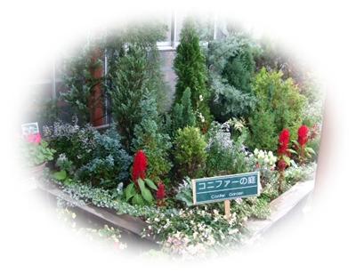 コニファーの庭