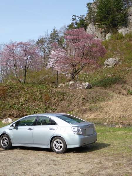 石割桜は(;_;)