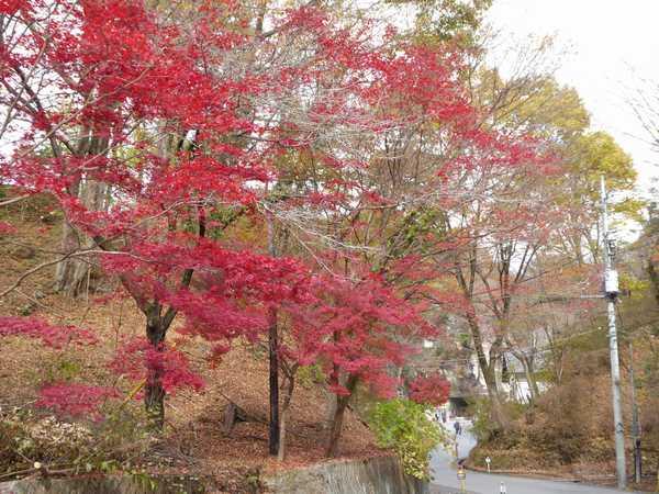 大谷資料館周辺は紅葉が見事