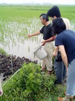 カモによる有機栽培