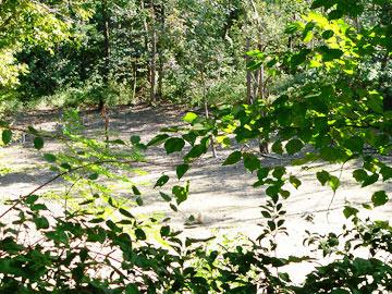 ハンノキ湿地07年10月21日