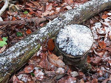 枯れ木に残る粉雪08年2月17日