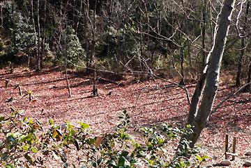 カラカラに乾いたハンノキ湿地08年2月17日