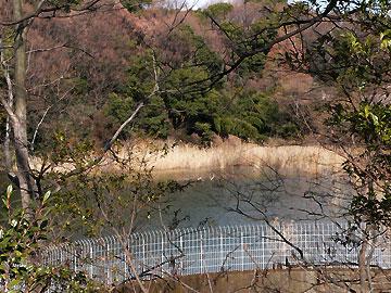 すっかり冬景色の猫ヶ洞池08年2月17日