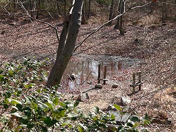 ハンノキ湿地08年3月16日