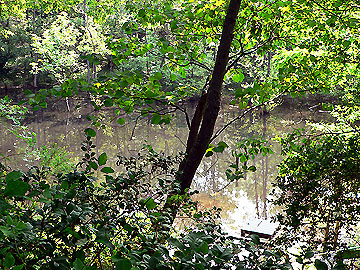 ハンノキ湿地08年5月18日