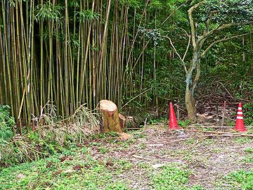竹林に沿って掘られた水路09年7月25日