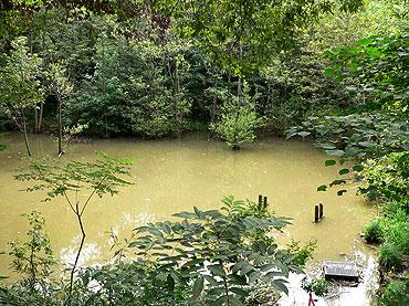 今月も水量豊富なハンノキ湿地09年8月16日