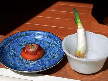 我が家の菜園09年9月14日
