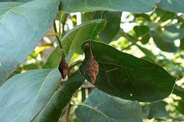 クモ類の卵のう12年10月21日