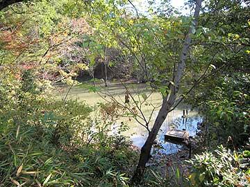 ハンノキ湿地12年11月18日