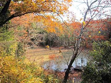 ハンノキ湿地12年12月16日