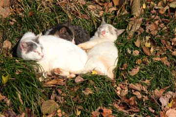 猫ヶ洞池周辺のノラちゃん達12年12月16日