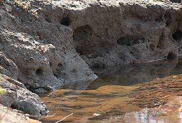 浅瀬の土手に開けられた穴12年12月13日