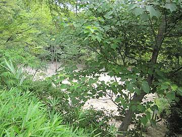 カラカラに干からびたハンノキ湿地13年7月21日