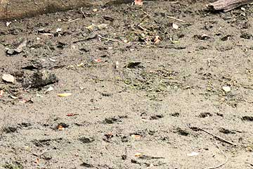 ベルマウスの周囲に残る足跡13年7月21日