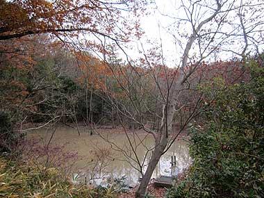 ハンノキ湿地13年12月15日