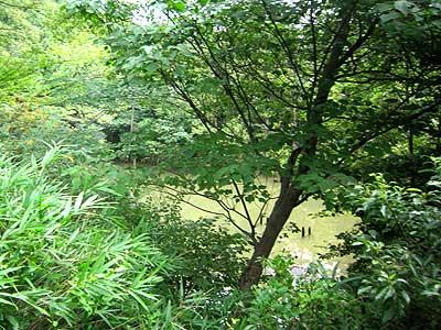 ハンノキ湿地15年7月19日