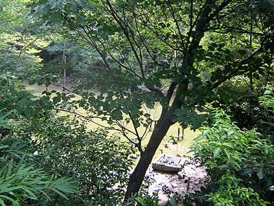 ハンノキ湿地15年8月16日