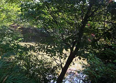 ハンノキ湿地15年9月20日