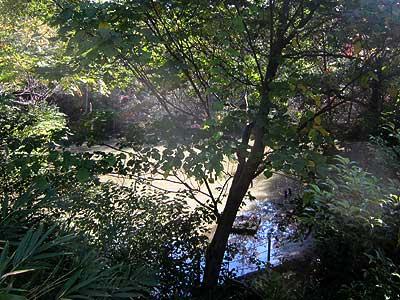 ハンノキ湿地15年10月18日