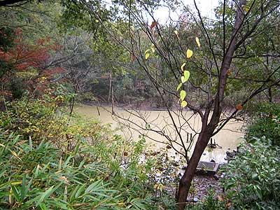 ハンノキ湿地15年11月15日