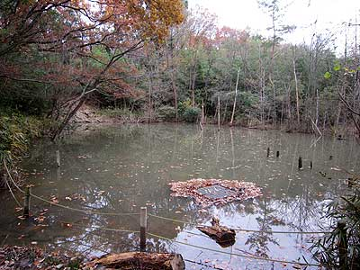 ハンノキ湿地15年12月20日