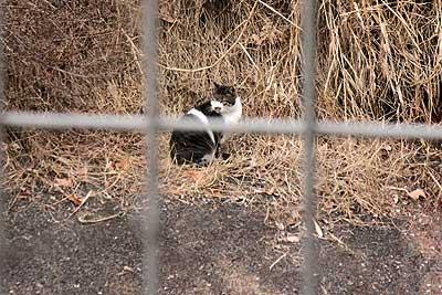 ベルマウスの中に入り込んだノラ猫16年1月17日