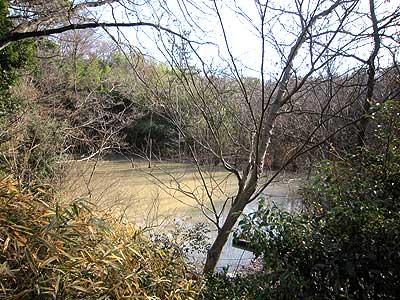 ハンノキ湿地16年1月17日