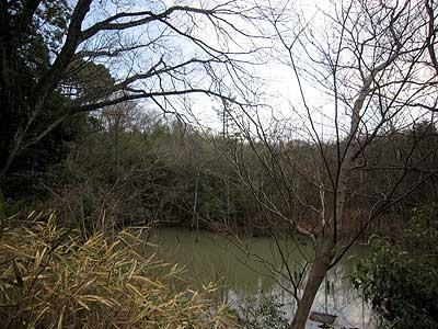 ハンノキ湿地16年2月21日