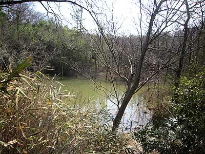 ハンノキ湿地16年3月20日