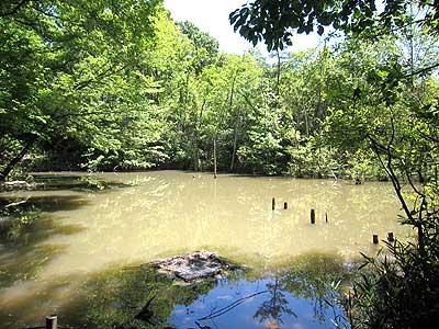 ハンノキ湿地16年5月12日