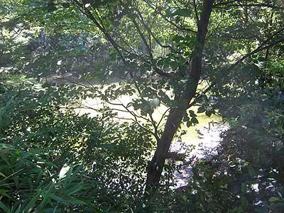 ハンノキ湿地16年8月21日