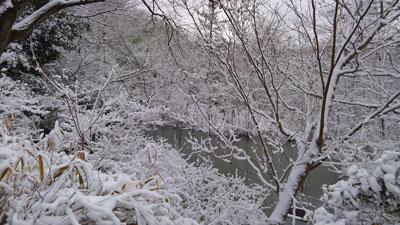 ハンノキ湿地17年1月15日