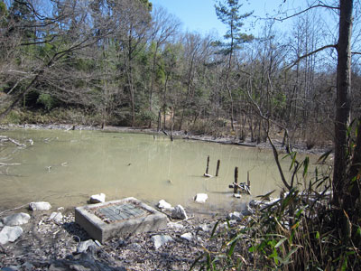 ハンノキ湿地17年3月16日