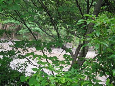ハンノキ湿地17年6月18日
