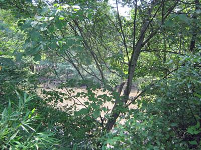 ハンノキ湿地17年7月20日