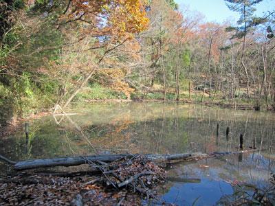 ハンノキ湿地17年12月10日