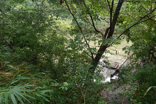 ハンノキ湿地18年9月16日
