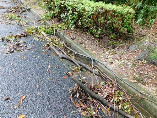 台風倒木18年9月16日
